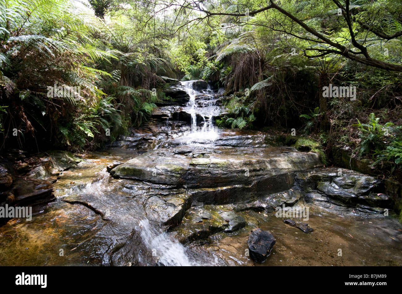 Leura cascades waterfall Blue Mountains New south Wales Australia - Stock Image