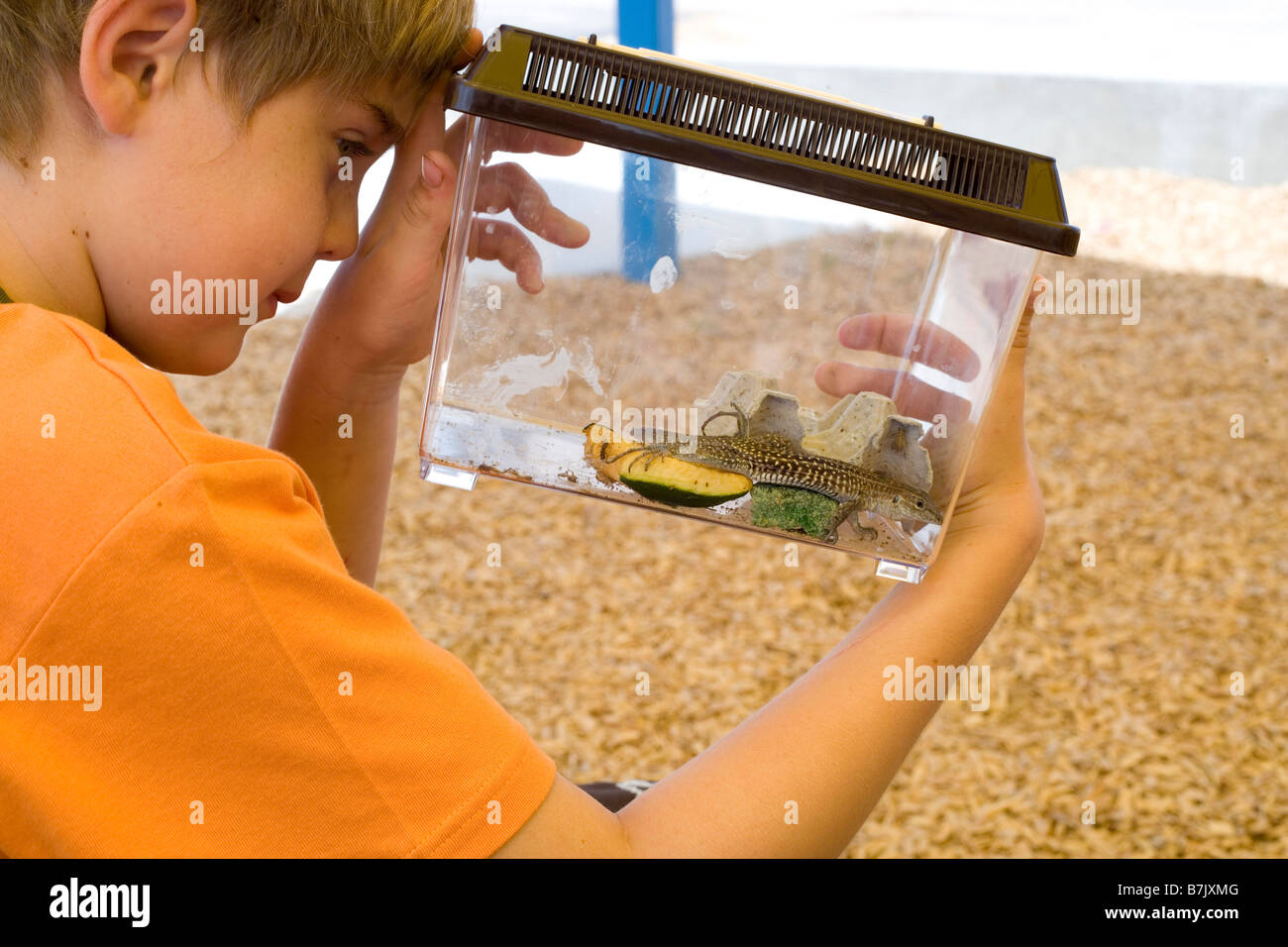eight year old boy holding plastic cage with captured lizard, southwestern united states - Stock Image