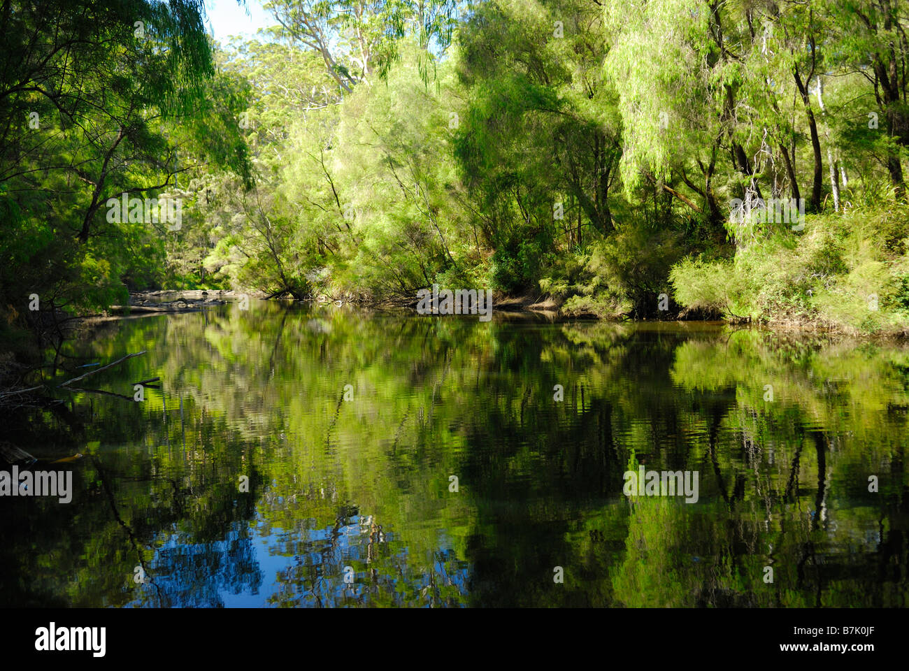 Warren River running through Warren National Park near Pemberton Western Australia - Stock Image