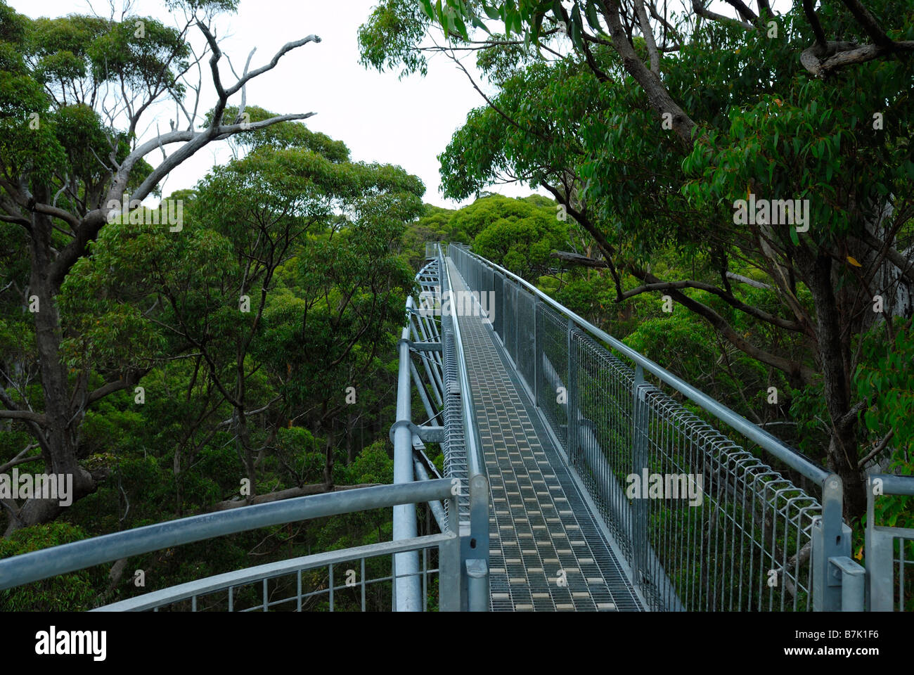 Tree Top Walk in the Valley of Giants in Nornalup National Park Walpole near Denmark in Western Australia - Stock Image