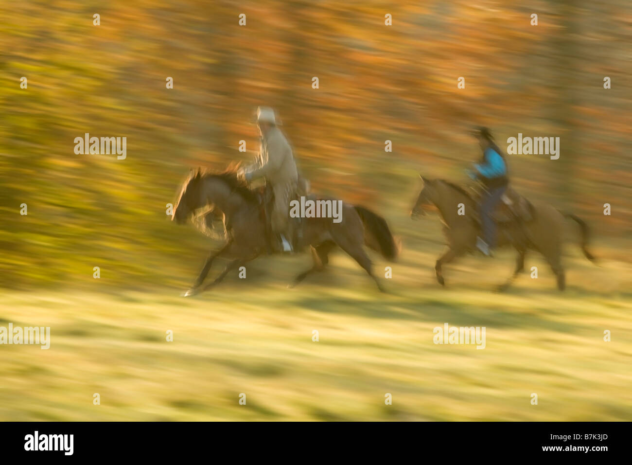 Two men on horseback galloping past forest in fall colors - Stock Image