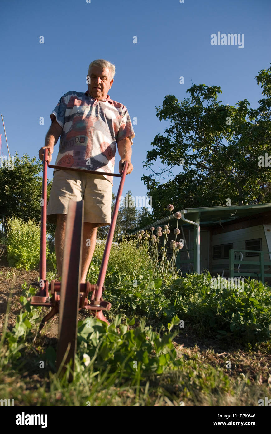 Senior using mechanical weeder, Okanagan Centre, BC Canada - Stock Image