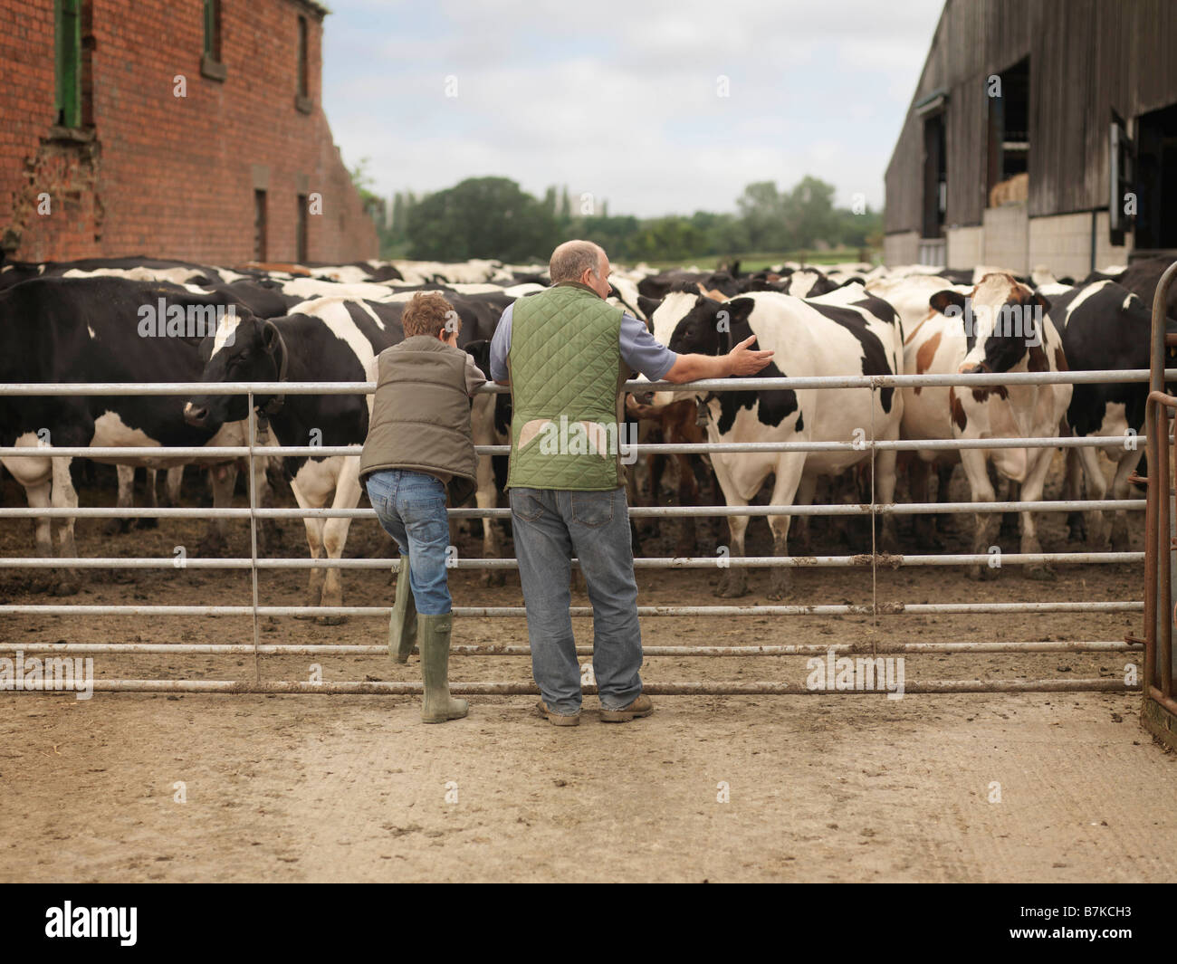 Farmer And Son Looking at Cows Stock Photo
