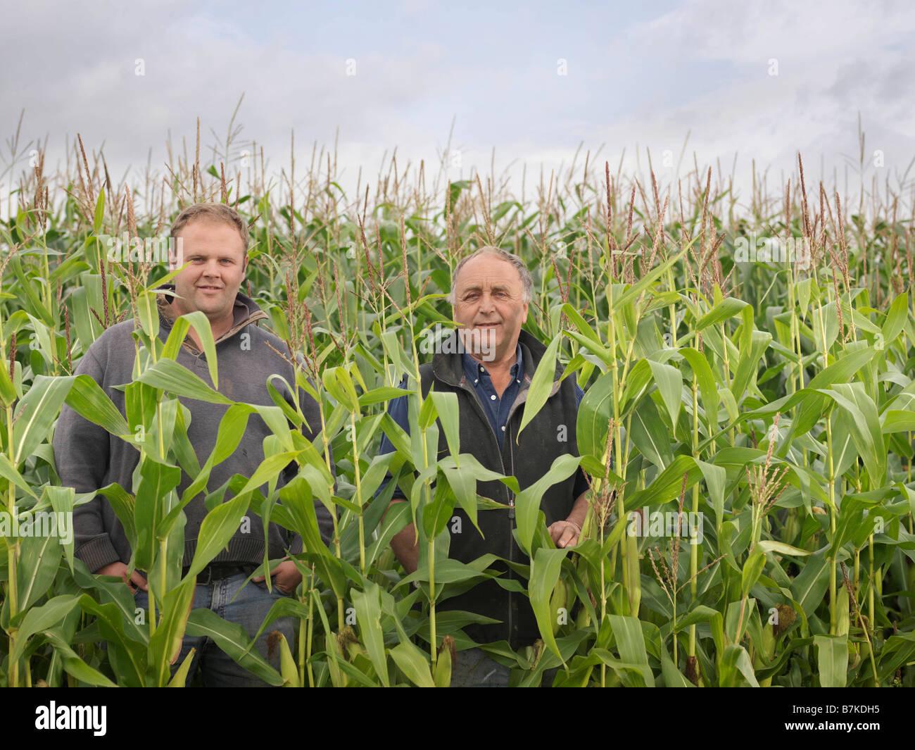 Farmers In Crop Field - Stock Image