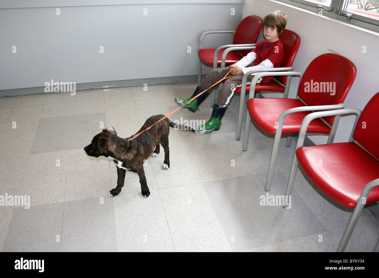child holding puppy on leash in waiting room, veterinarian visit for vaccine - Stock Image