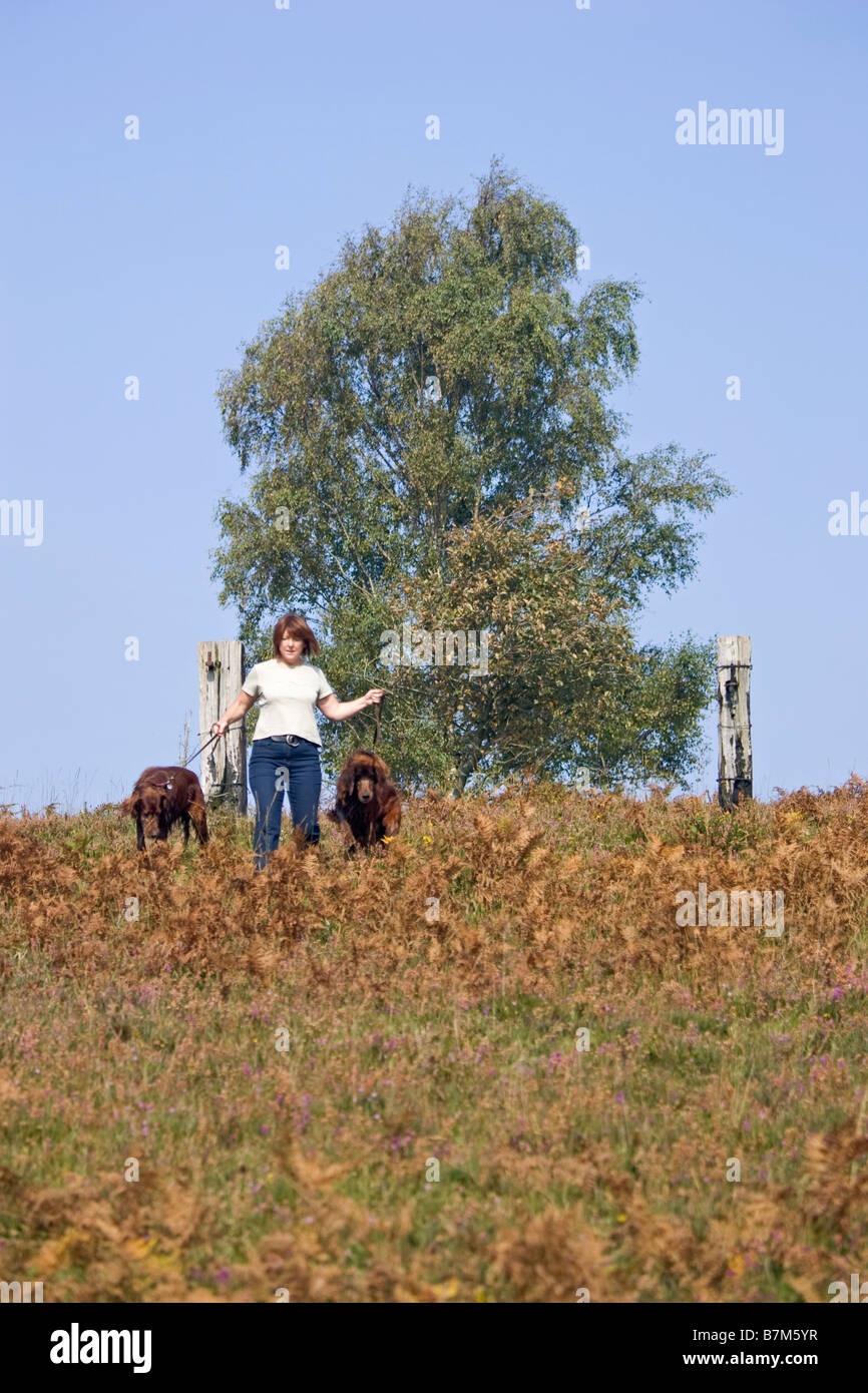 Lady walking dogs in New Forest Hampshire England Stock Photo