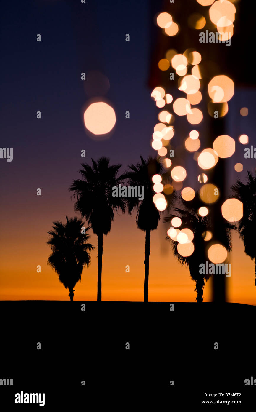 Palm Trees At Sunset With Christmas Lights Venice Beach Los Angeles County California United States Of