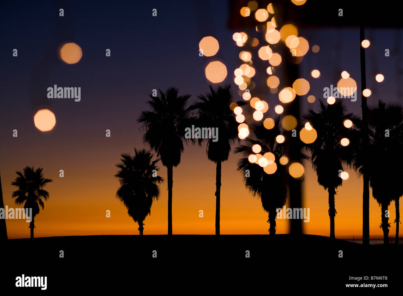 palm trees at sunset with christmas lights venice beach los angeles