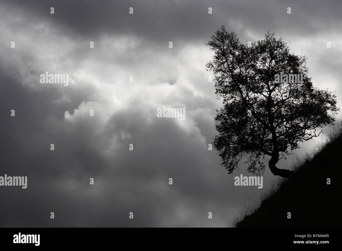 Silhouette of small tree on steep slope against dark grey clouds Perthshire Scotland - Stock Image