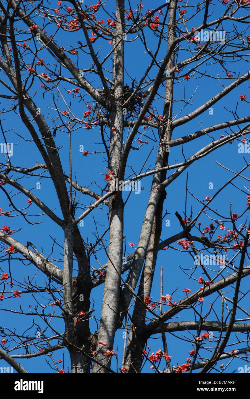 birds,nature,Advertise,Advertisement,Advertise,Advert,Advertiser,Advertising,art.animation,3D animation,trees,kerala,kollam - Stock Image
