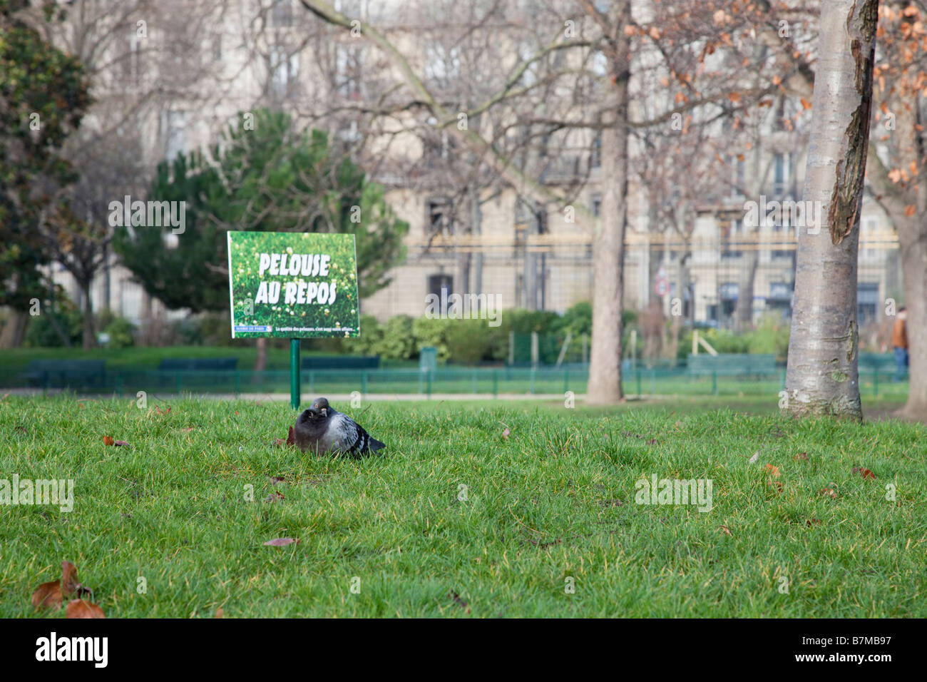 Pigeon resting by a 'Pelouse au repos' sign - Stock Image
