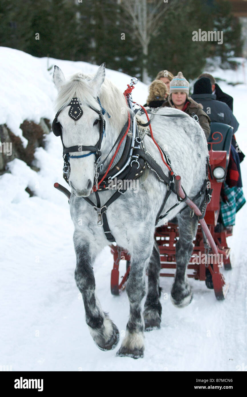 Horse drawn sleigh ride Whistler British Columbia Canada - Stock Image