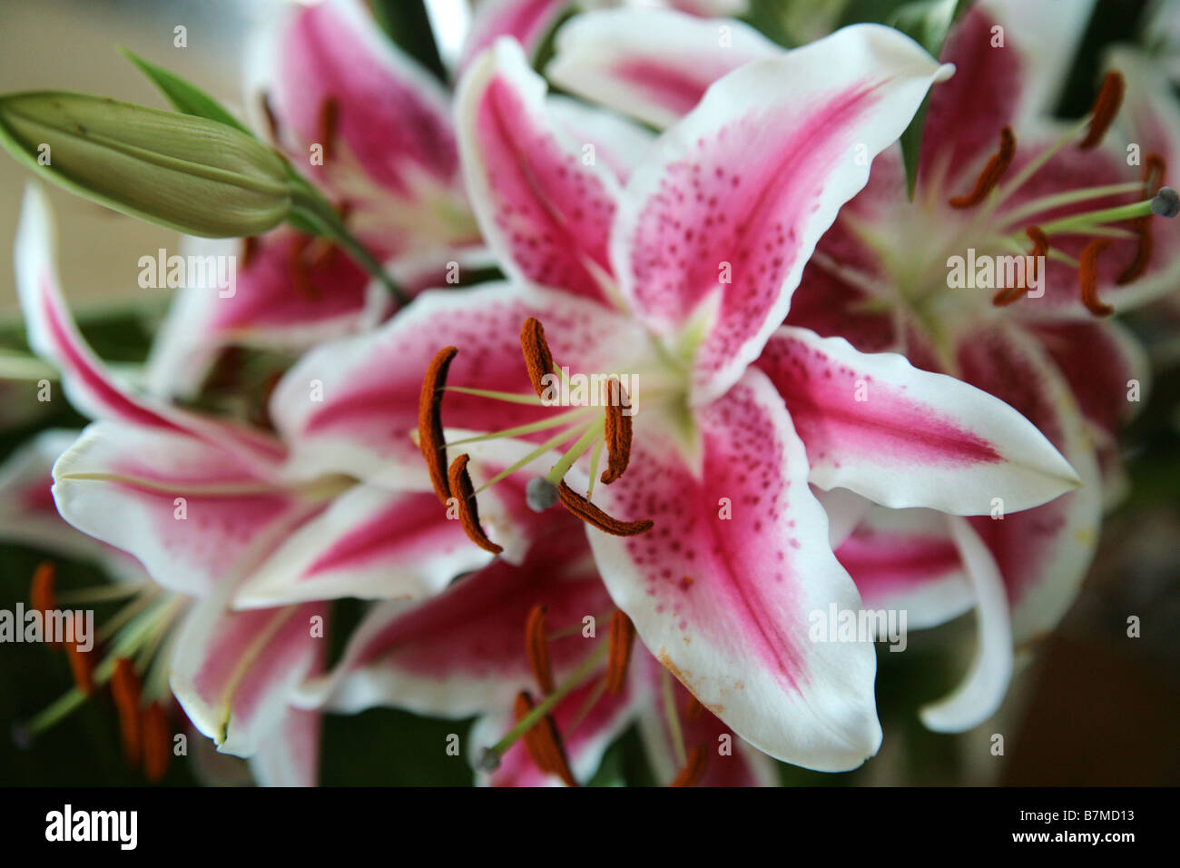 Rare tropical flowers stock photos rare tropical flowers stock exotic flower seen at an arrangement made of tropical colourful flowers stock image mightylinksfo