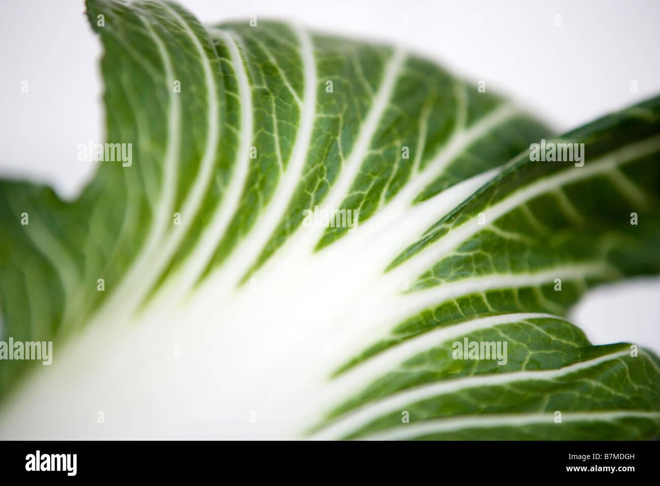 one leaf of fresh bok choy bok choi chinese cabbage - Stock Image