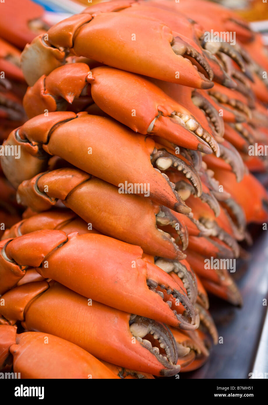 Lobster Claws - Stock Image
