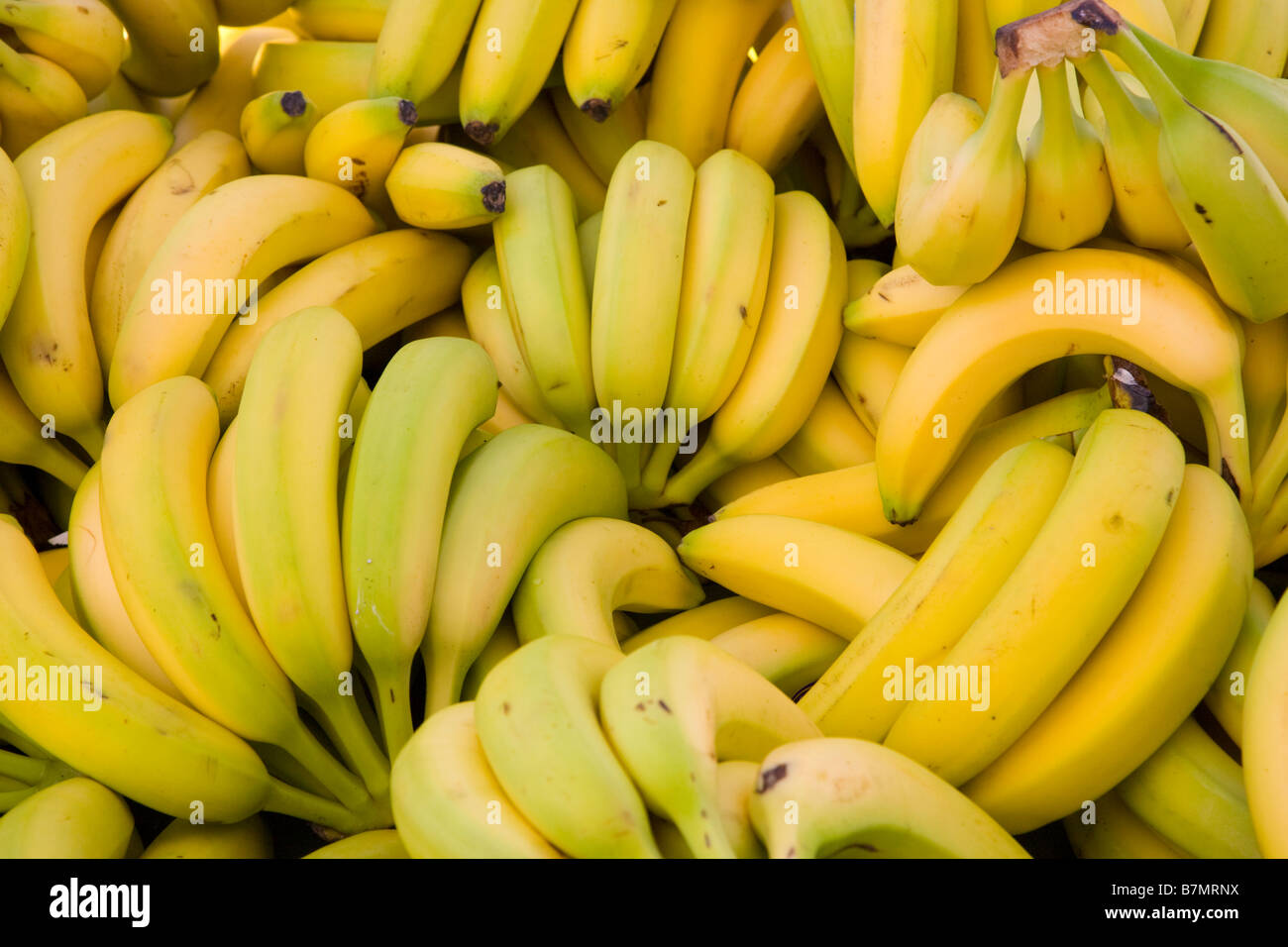 Bunches of bananas - Stock Image