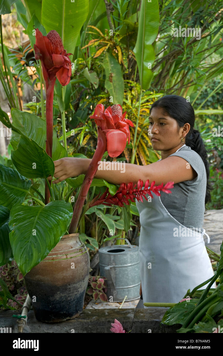 Honduras, Copan, Hacienda San Lucas. Arranging flowers at the Hacienda San Lucas - Stock Image