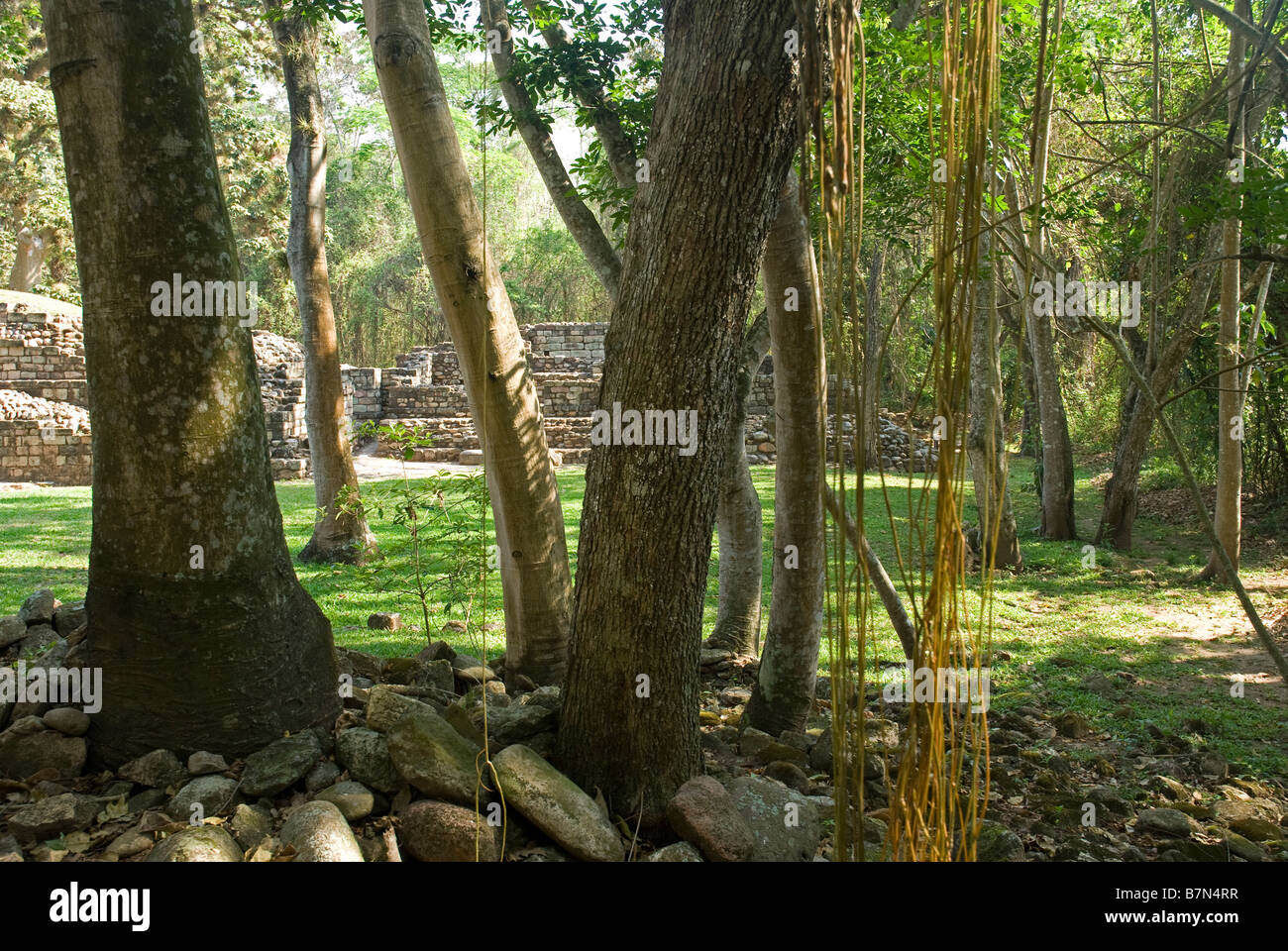 Honduras, Copan, Maya Ruins of Copan, a UNESCO World Heritage Site. - Stock Image