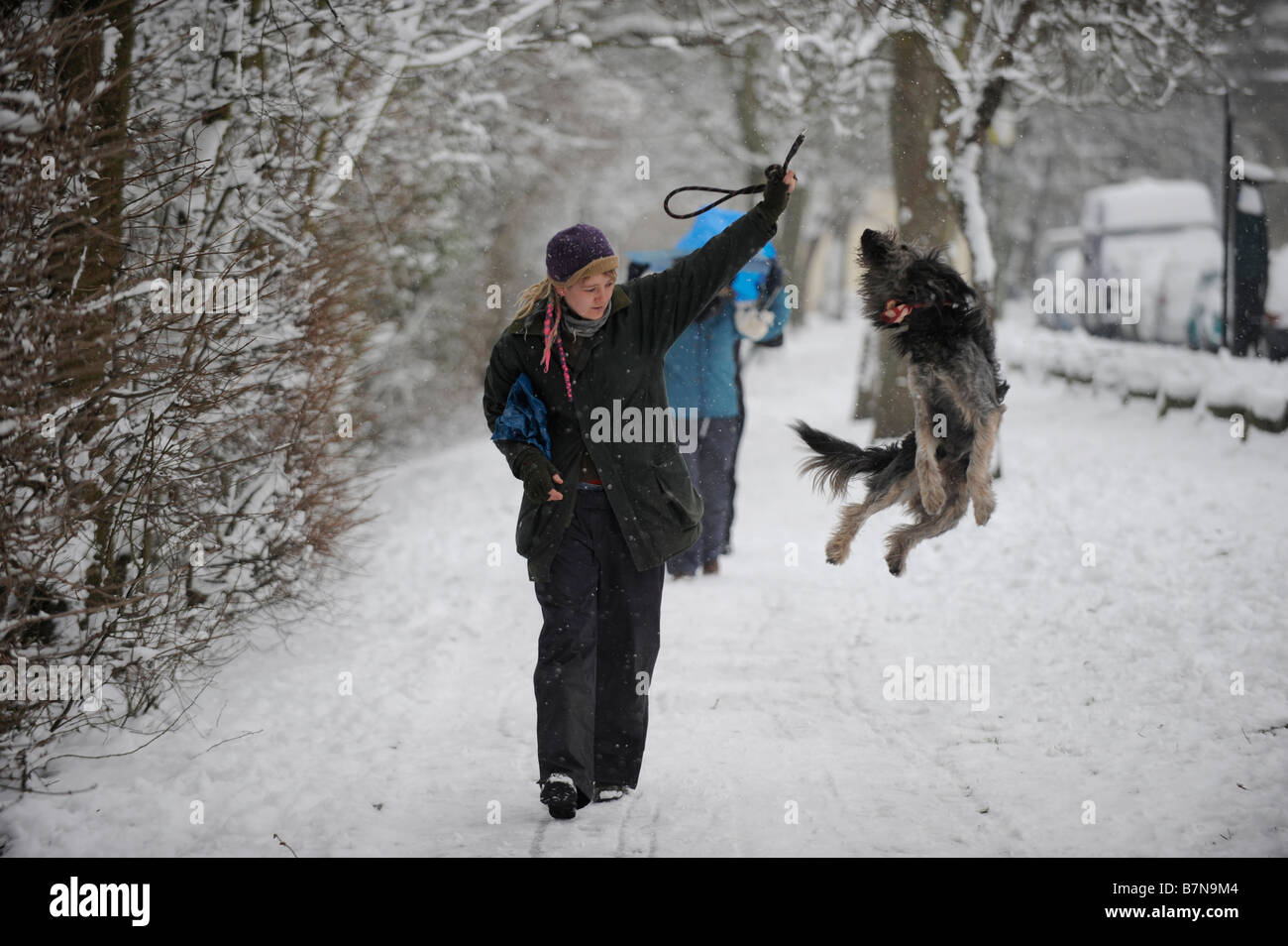 A dog leaps in the snow with its owner at Queens Park in Brighton UK Feb 2009 - Stock Image
