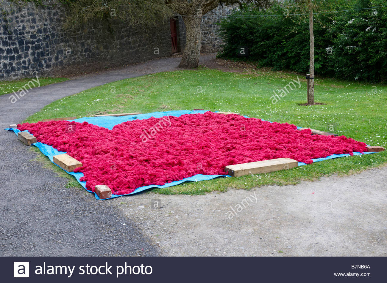 Red dyed skeins of wool drying naturally in the sunshine in the museum of welsh life in st fagans near cardiff south - Stock Image