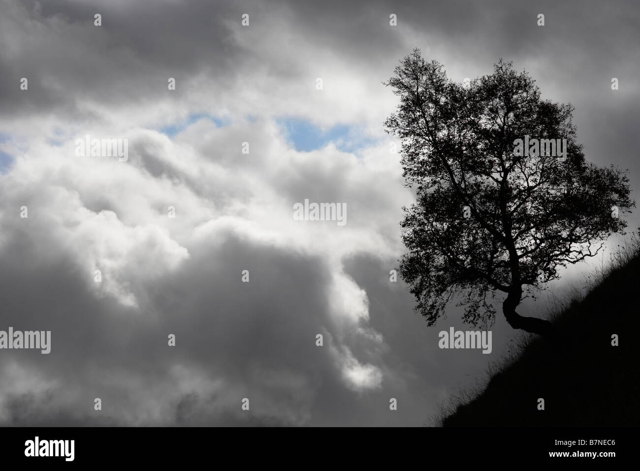 Silhouette of small tree on steep slope against dark grey clouds in Perthshire Scotland - Stock Image