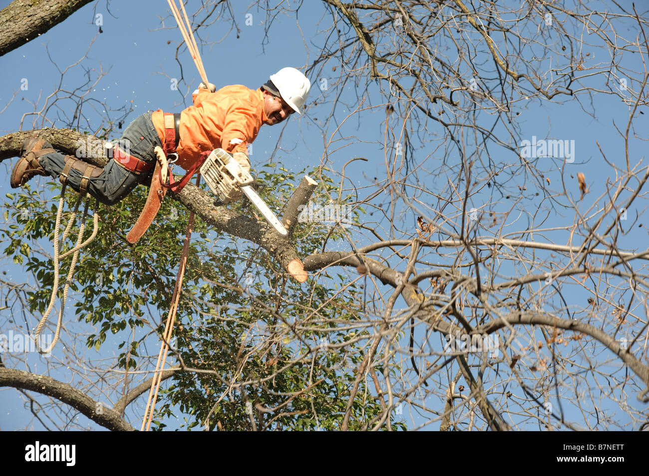 Lumberjacks chopping down a tree - Stock Image