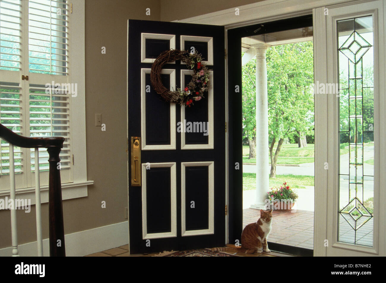 House cat sitting at open front door Stock Photo 21987674 Alamy