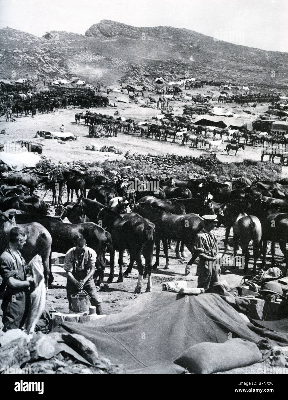 SULVA BAY  British army horses  landed on the Turkish coast in 1915 during WWI - Stock Image