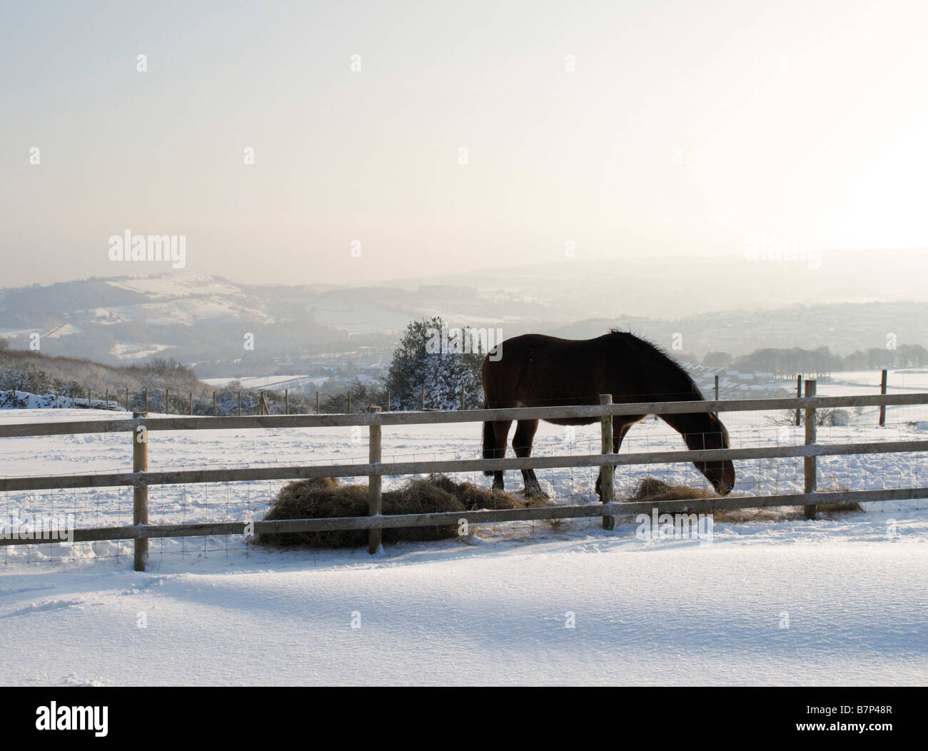 Horse eating hay in the countryside at Wilshaw, near Holmfirth, during the February 2009 snowfalls, West Yorkshire, - Stock Image