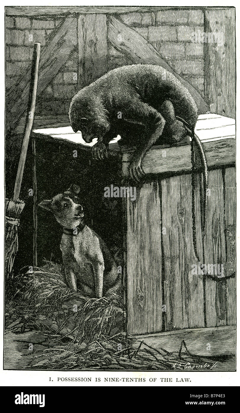 possession in nine tenths of the law dog monkey box straw brush teeth point monkey dog fear box ape canine pet zoo - Stock Image