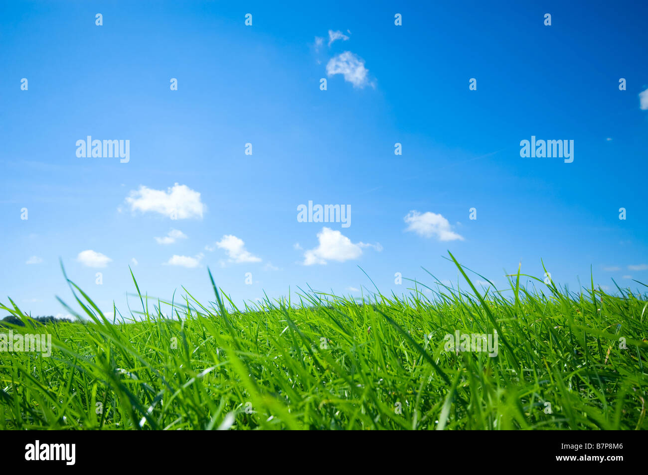 fresh green grass with bright blue sky background - Stock Image