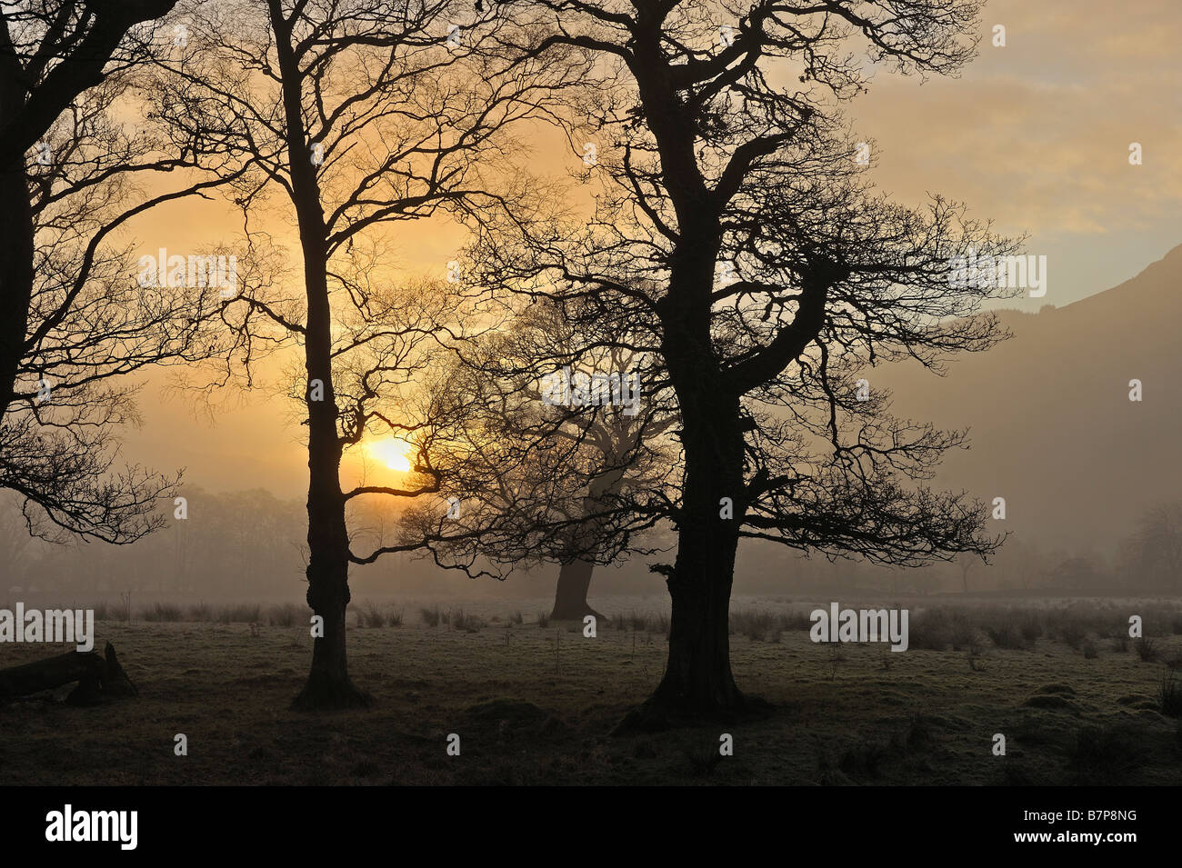 Late sun shines through silhouetted trees on a winter afternoon near Killin Perthshire Scotland UK - Stock Image