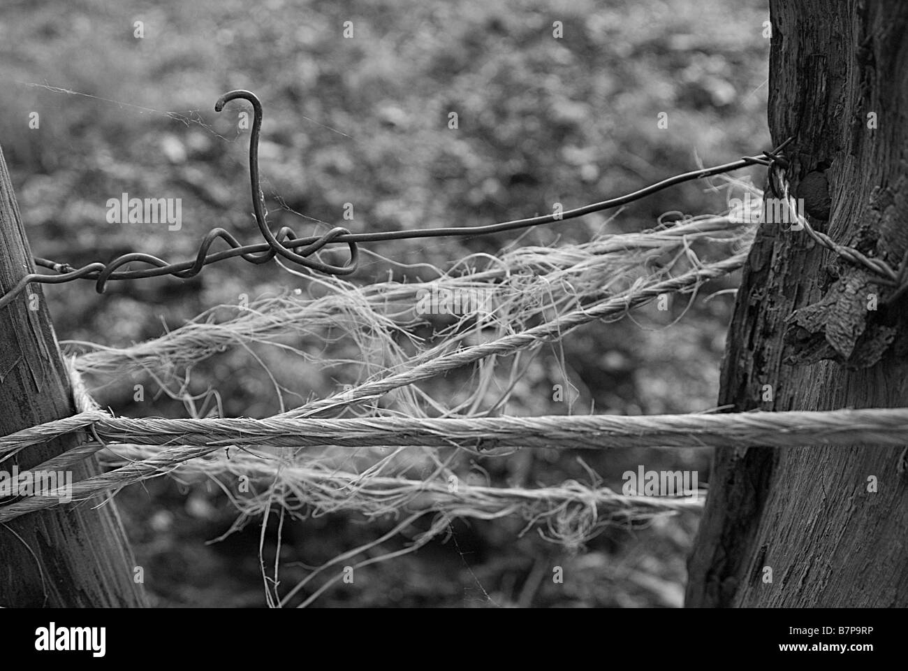 Close-up of a rope tied between to wooden poles - Stock Image