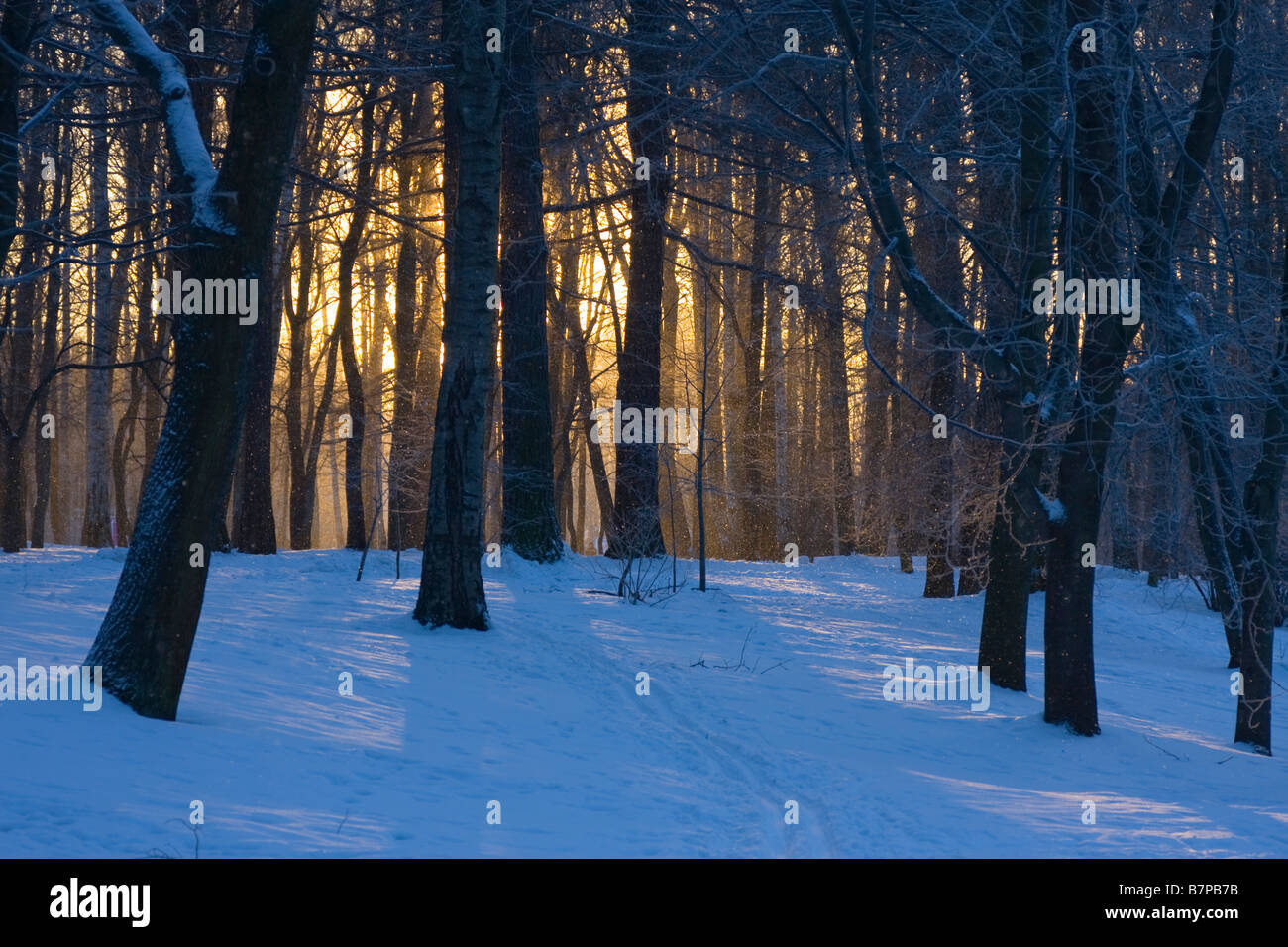 Winter sunset in snow covered wood - Stock Image