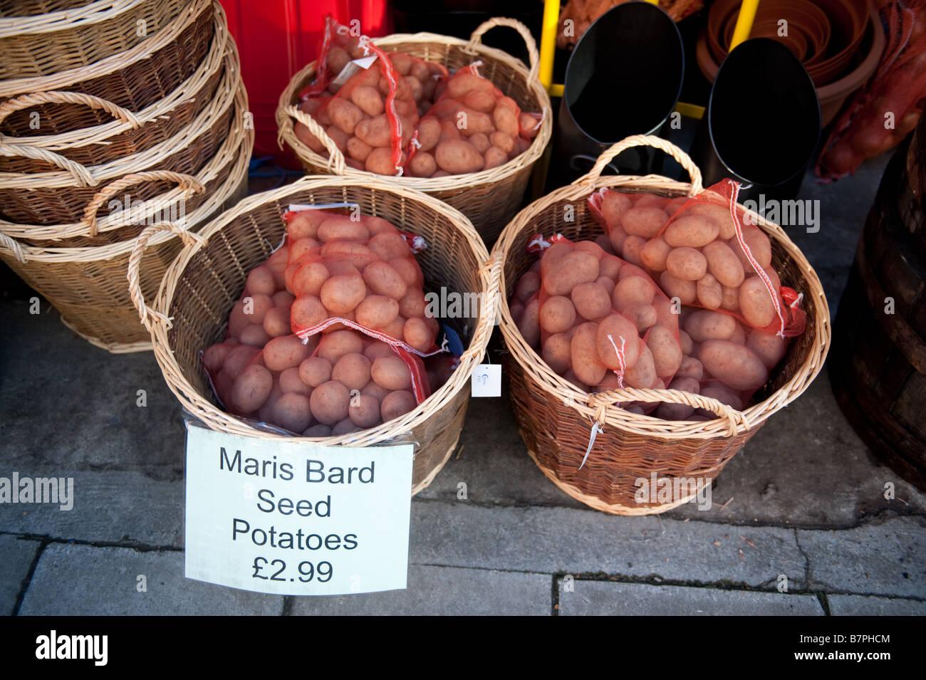 Baskets of MARIS BARD seed potatoes on sale - Stock Image