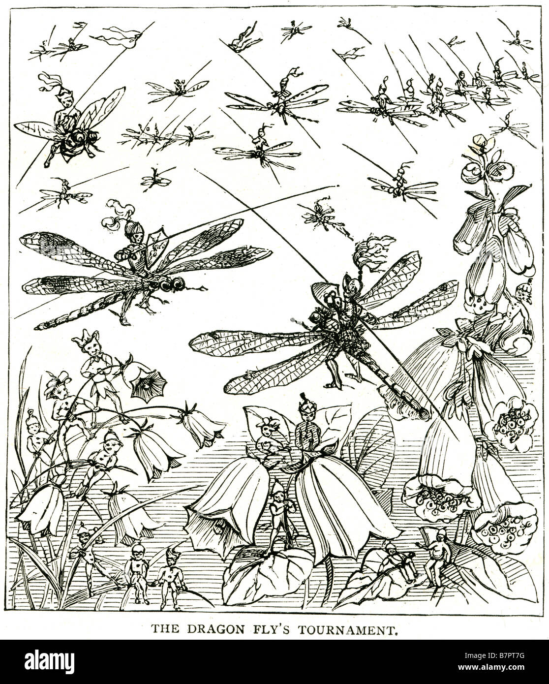 dragon fly tournament joust fairies insects fantasy cartoon jousting blue bells flower summer outside garden park - Stock Image