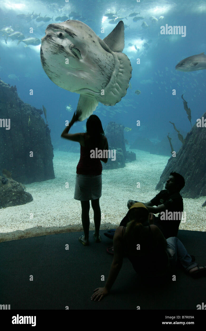 Moon fish at Lisbon`s Oceanarium, in the Expo 98 site of Parque das Nações. Stock Photo
