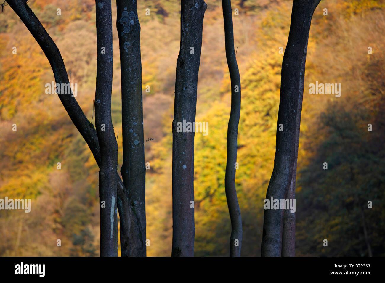 Bäume im Herbst, - Stock Image