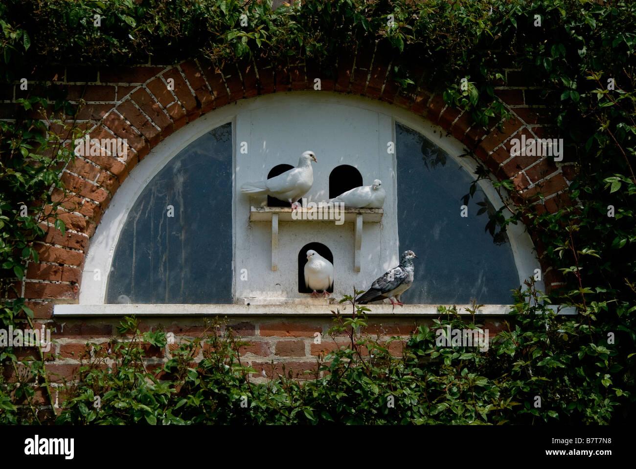 Racing Pigeon Loft Stock Photos & Racing Pigeon Loft Stock