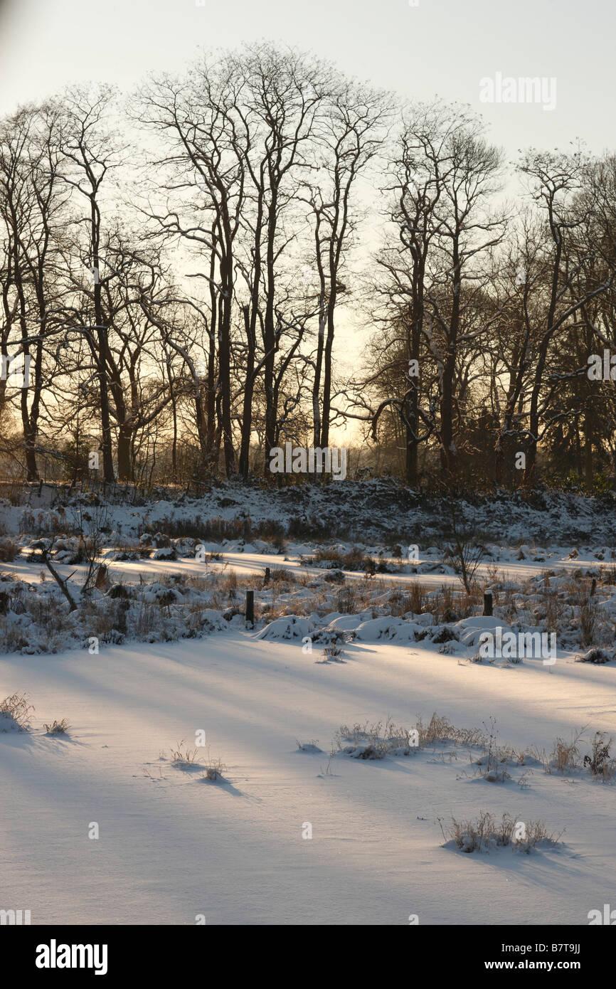 Krefeld, Niepkuhlen, Naturschutzgebiet, Niederrheinlandschaft im Schnee - Stock Image