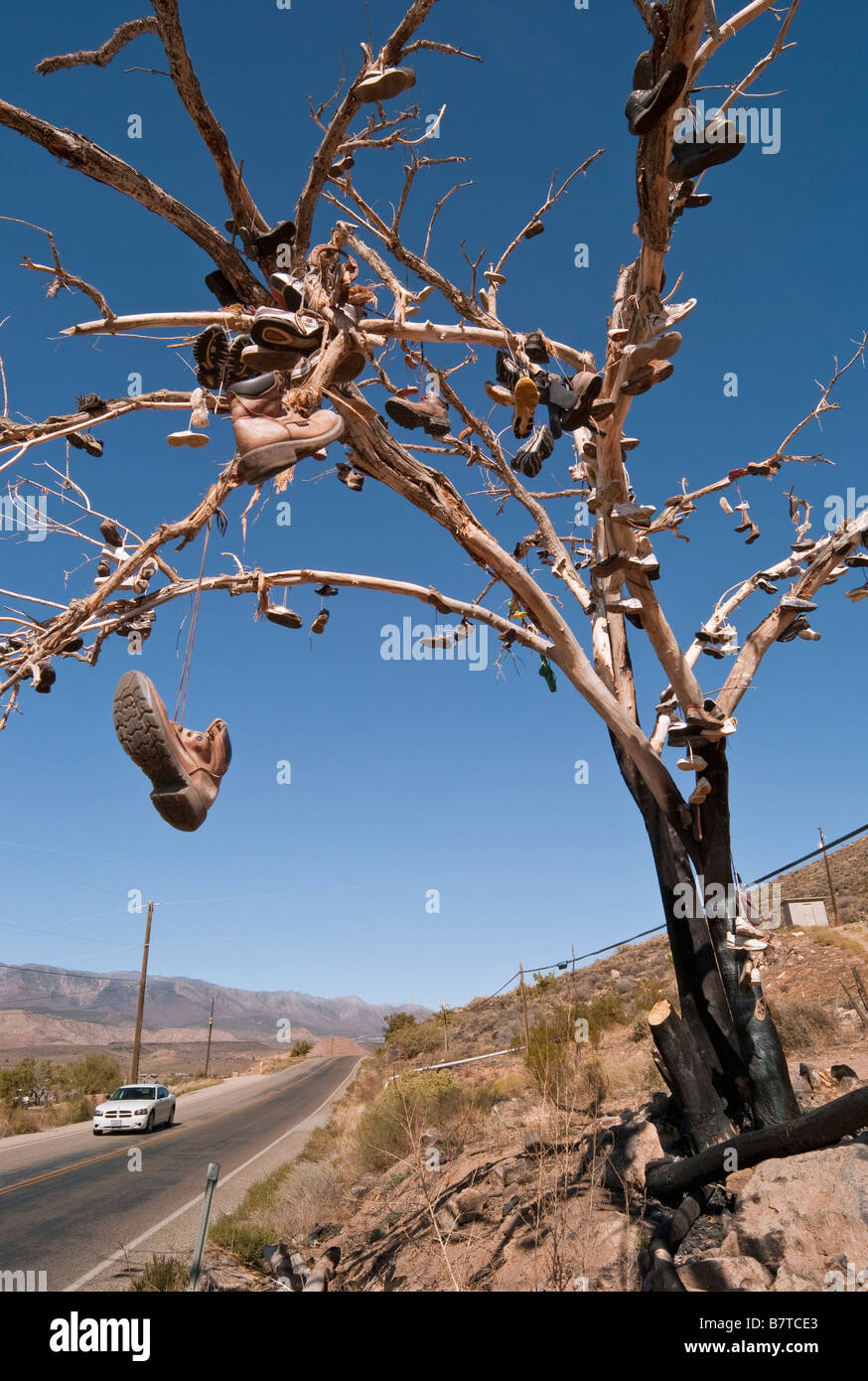 Shoe tree shoes hanging in tree Southern Utah USA - Stock Image