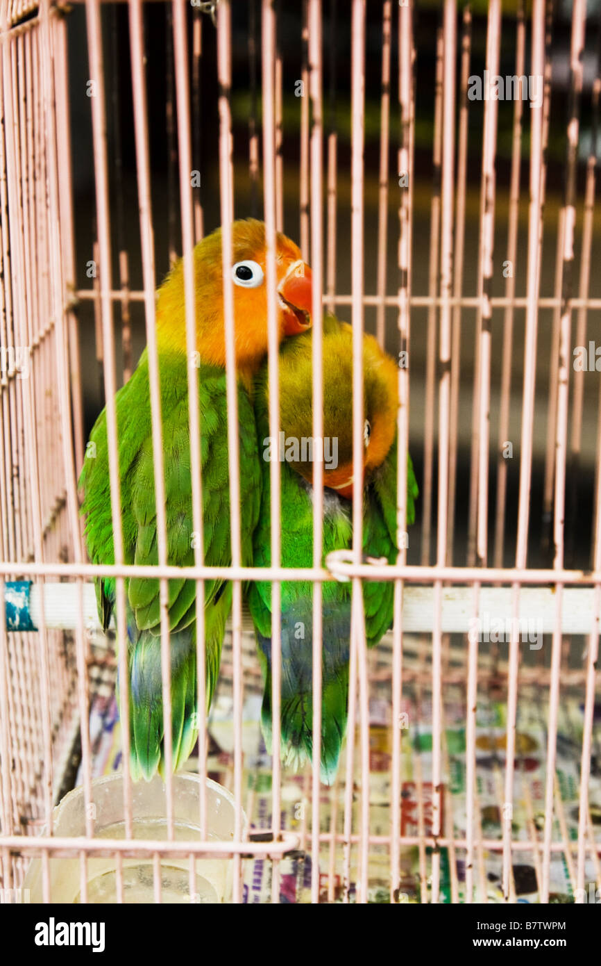 Lovebirds for sale, Yuen Po Street Bird Market Stock Photo: 22060044