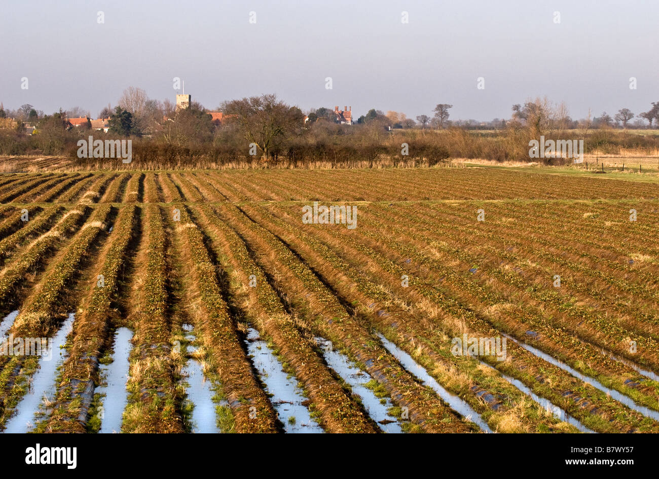 Waterlogged furrows in a field Stock Photo