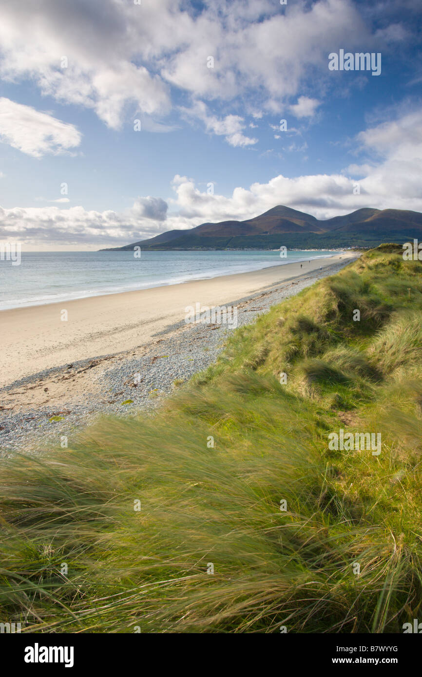 Sand dunes at Murlough alongside Dundrum Bay with the Mountains of Mourne in the background County Down Northern - Stock Image