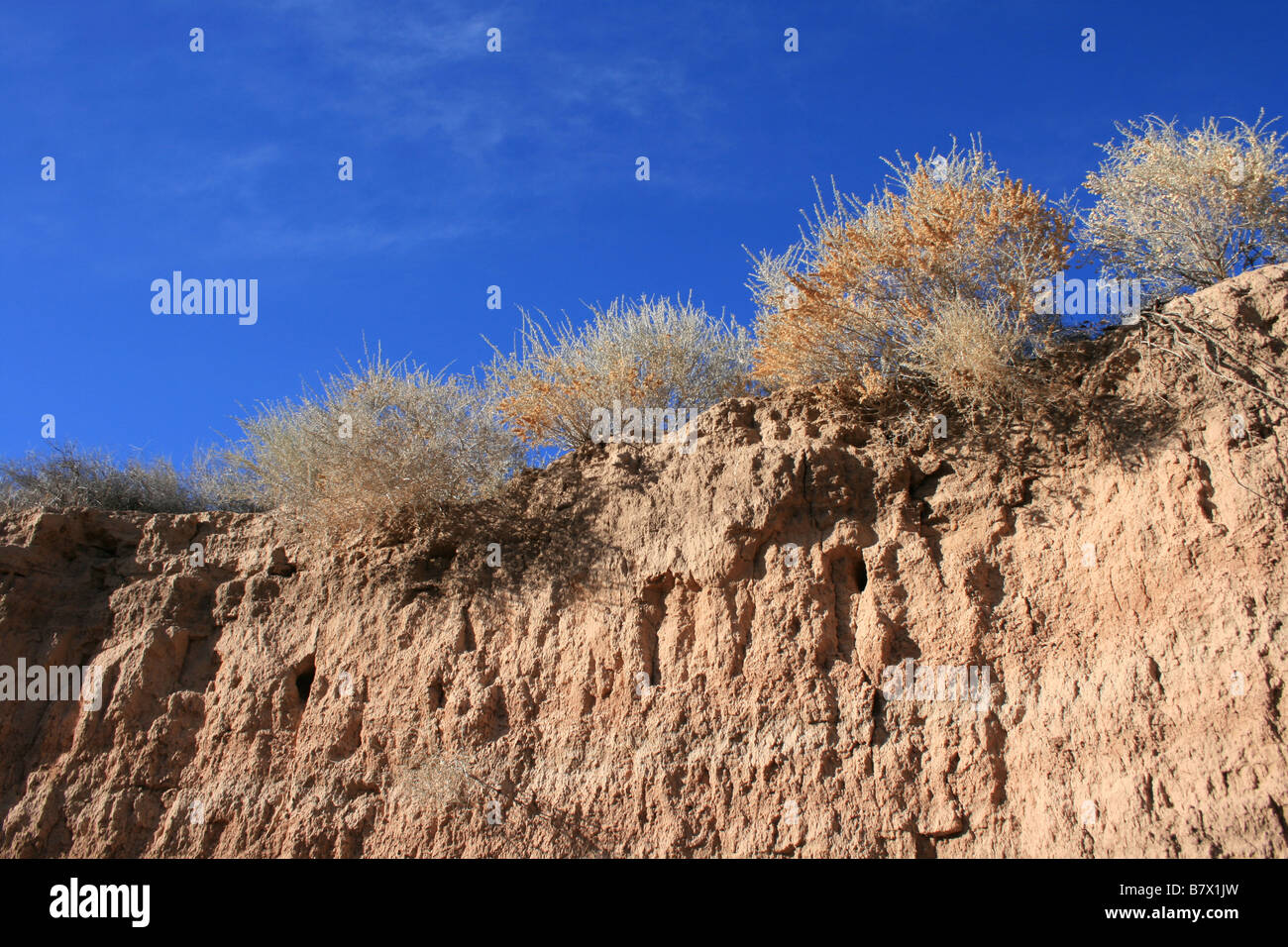 layers of dirt, exposing sea shells and fossils, edge of an arroyo against a blue sky, Albuquerque, New Mexico - Stock Image