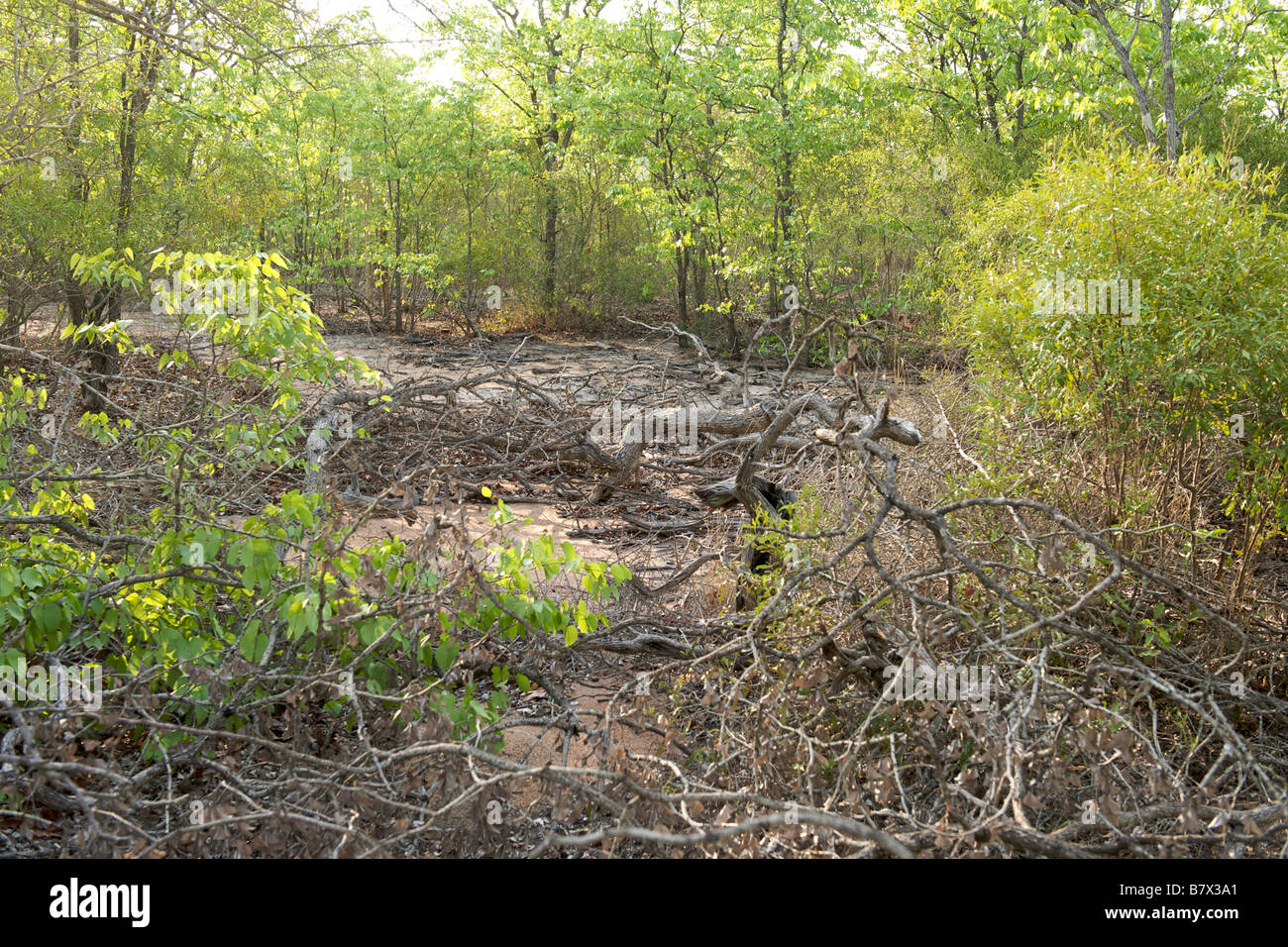 A minefield in the bushveld in Gaza province of Mozambique. - Stock Image