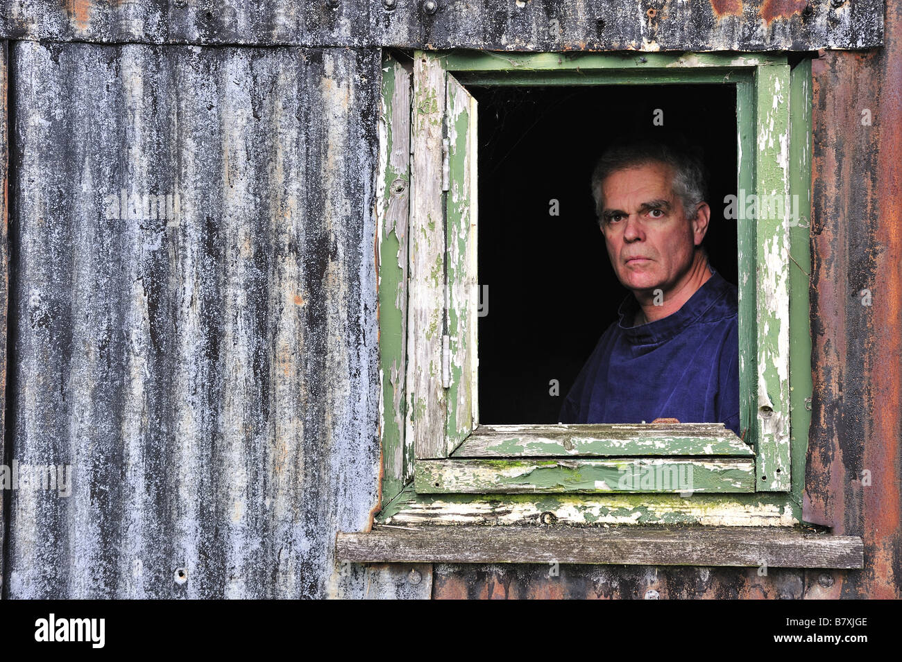 A man looks out through the rotting window of a derelict corrugated iron shed - Stock Image