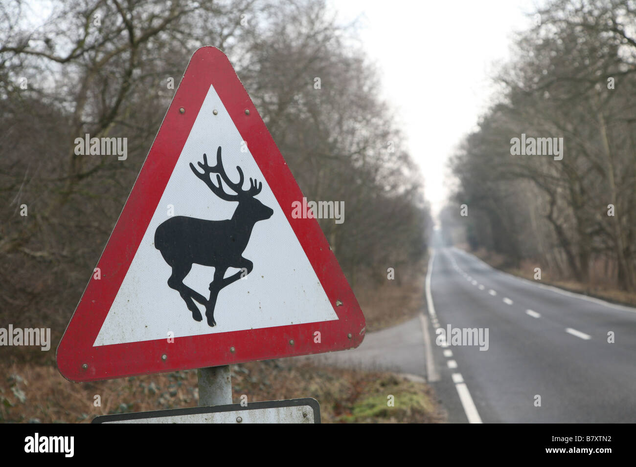 Triangular road sign warning of deer on road Sutton Suffolk England - Stock Image