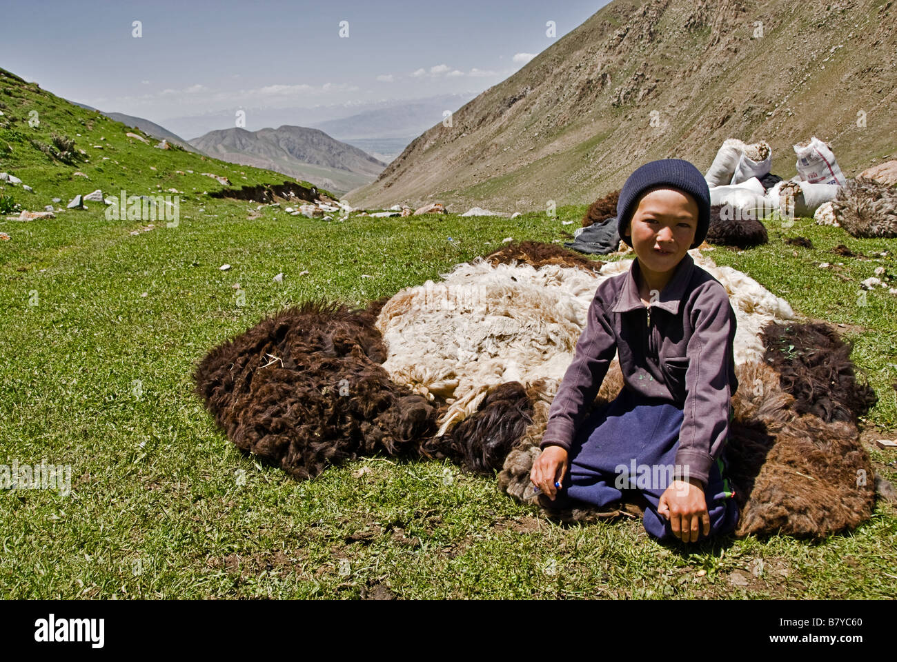 Kyrgyz nomads shearing sheep in the fields Kyrgyzstan - Stock Image