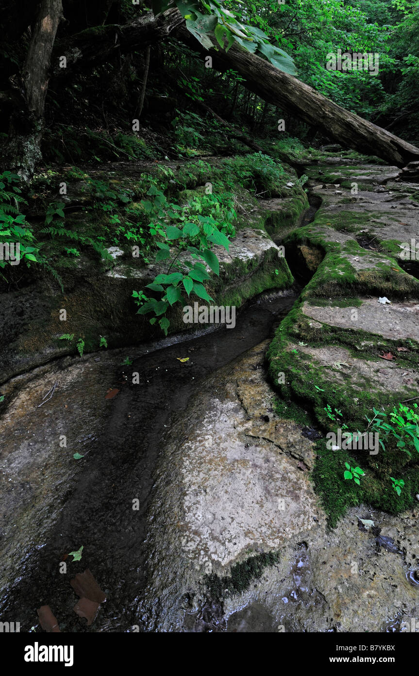 stream creek carved carve channel path Clifty Wilderness Red River Gorge Geological Area Daniel Boone National Forest - Stock Image
